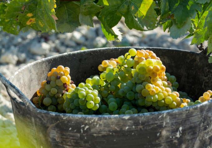 Vitae Villas Spain Andalucia Vino
